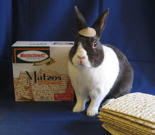 Pet of the Week: Napoleon Bunnypart Has Complexes Over Blueberries — Pets on Bushwick Daily