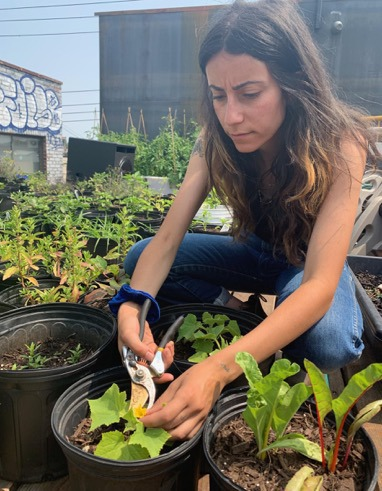 Enlightenment Wines Meadery is Hosting a Summer-Long Workshop Series on Plant Education — Food and Drink on Bushwick Daily