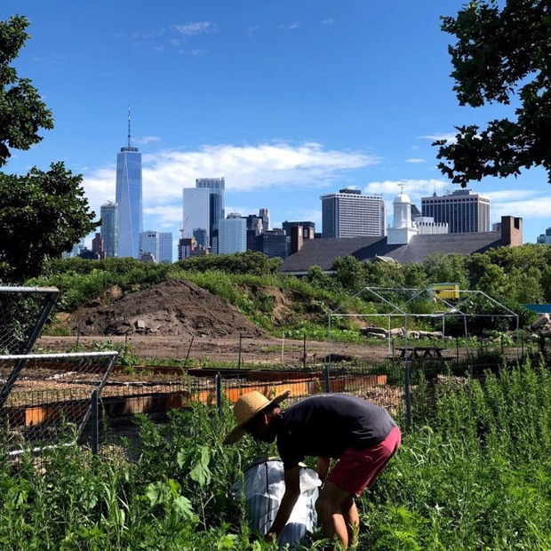 Local Sustainability Platform Gains Recognition Abroad and Makes Living Green Easy for All — Community on Bushwick Daily