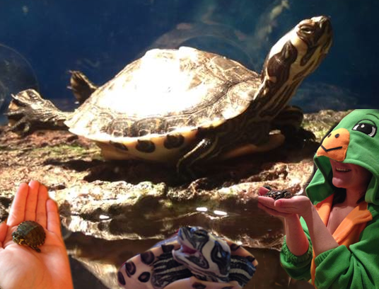 Pet of the Week: Banana, the Turtle Sometimes Needs to Be Tied to a Balloon — Pets on Bushwick Daily