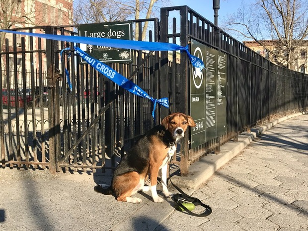 Parks and Playgrounds Are Open, But Dog Runs Aren't?  Bushwick Dog Owners Aren't Happy — News on Bushwick Daily