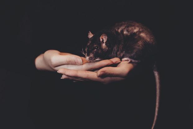 Brooklyn Had a Rat Summit to Address the Furry Friend Infestation — Community on Bushwick Daily