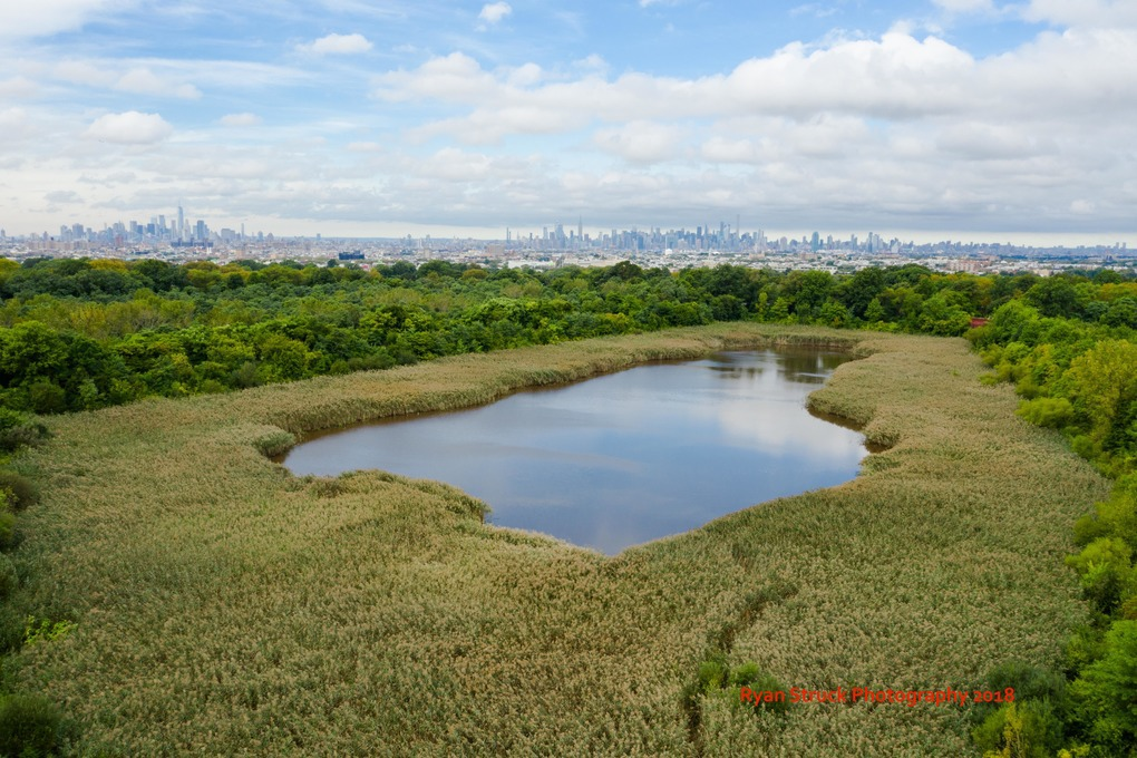 Community Members Fight for New Bus Stop at Ridgewood Reservoir  — Community on Bushwick Daily