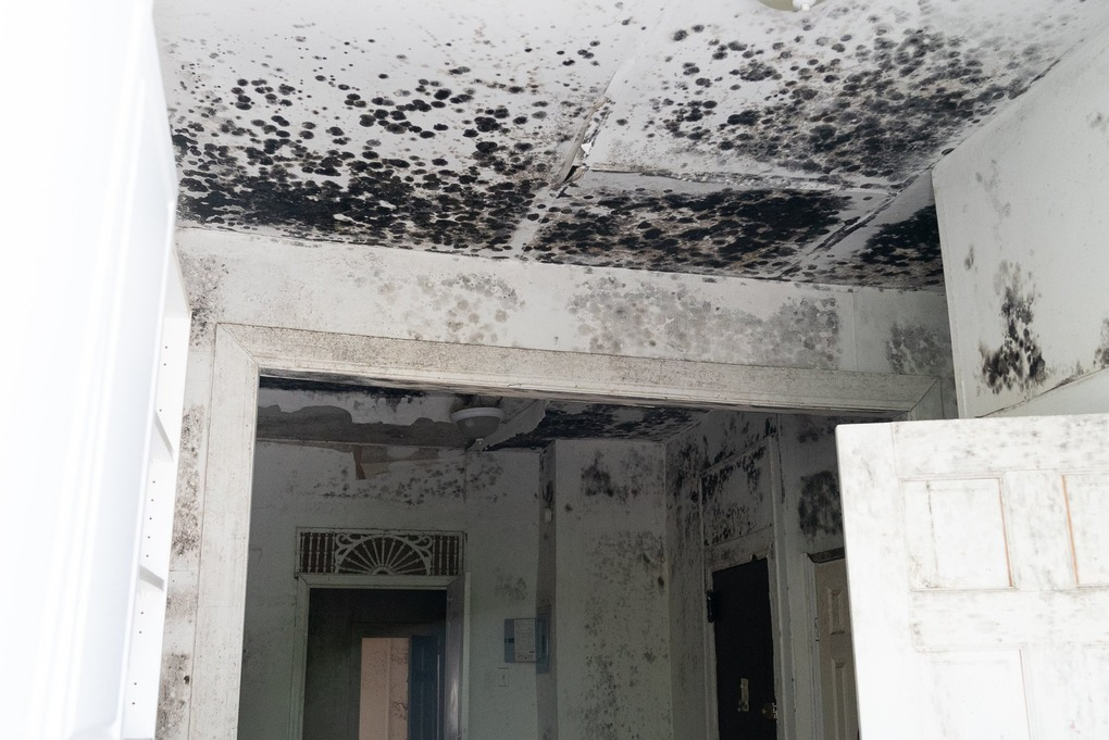 Life-Threatening Mold Brings Bushwick Tenants to File Lawsuit Against Landlords — News on Bushwick Daily