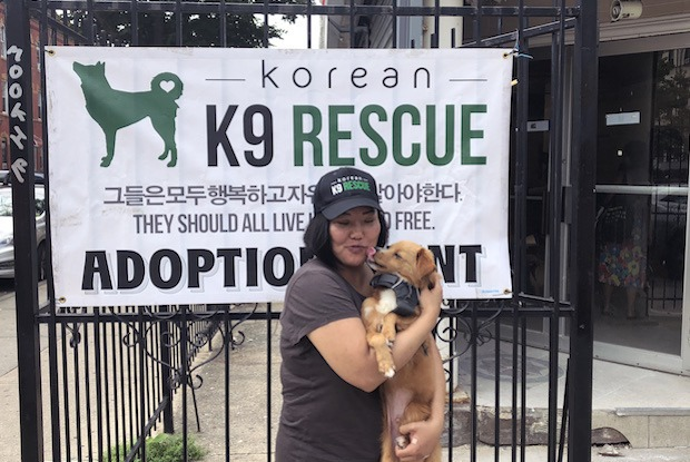 Local Dog Rescue Looks To End Korean Dog Meat Trade — Community on Bushwick Daily