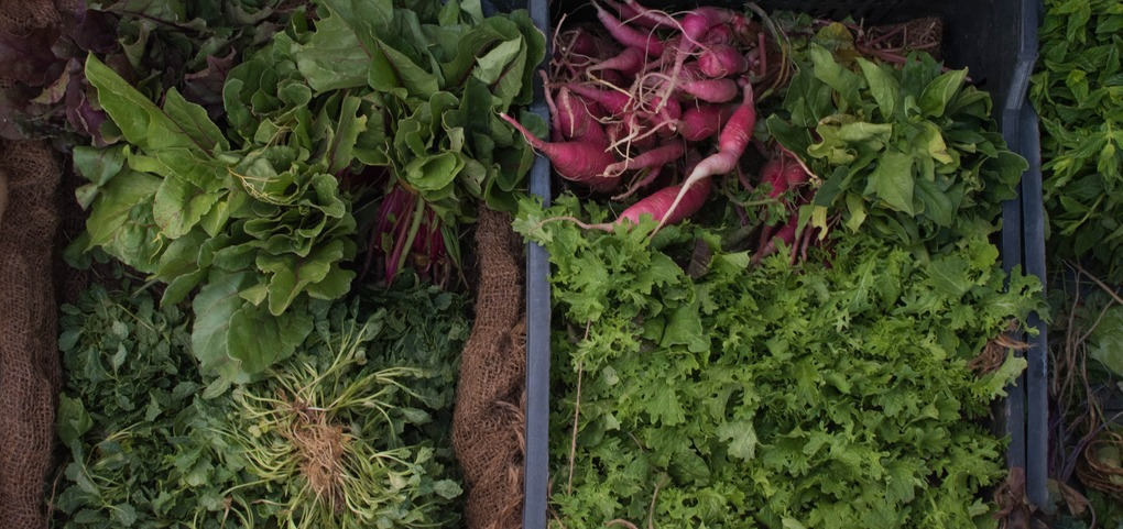Want to Talk Urban Farming? Join Council Member Espinal Tonight — Community on Bushwick Daily