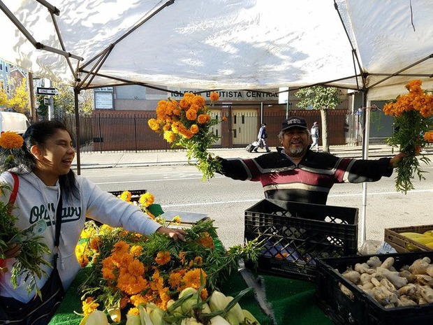GrowNYC Will Host a New Farmers Market at Woodhull Hospital Starting July 10  — News on Bushwick Daily