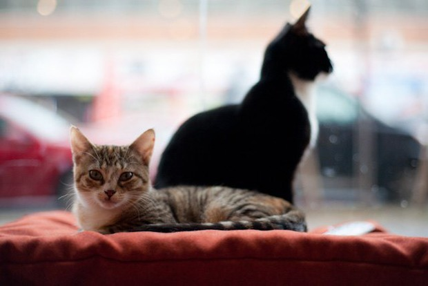 Bushwick's Pet Superette Offers Adorable Cats and Kittens for Adoptions — Pets on Bushwick Daily