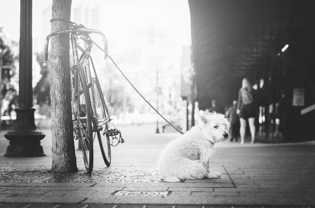 Fast Facts: The Most Popular Dog in Bushwick is... — Community on Bushwick Daily