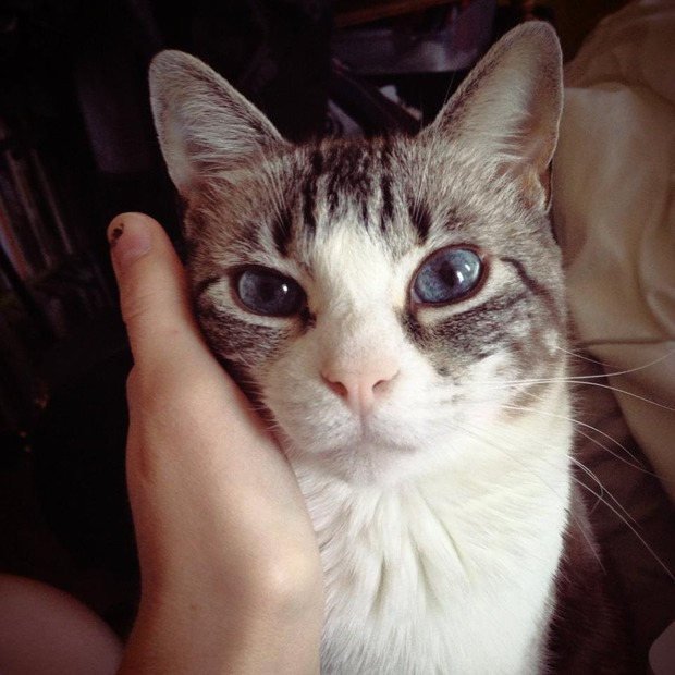 Bushwick Pet of the Week: Meet Little Bat... The Cat. — Pets on Bushwick Daily