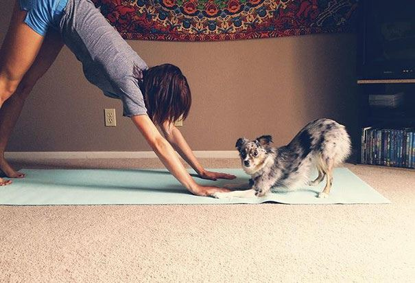 At Doga, You Don't Have to Choose Between Yoga and Time With Your Pup — Community on Bushwick Daily