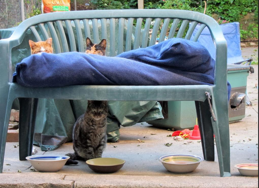 Cat Loving Fosters Wanted at Bushwick Street Cats — Arts & Culture on Bushwick Daily