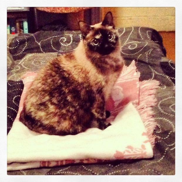 Pet of the Week: Carmella the Kitty Ain't a Soprano — Pets on Bushwick Daily