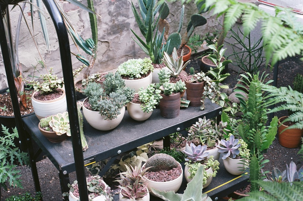 East Williamsburg's Tula Brings Their Beautiful Plants to an Outdoor Pop-Up — Fashion and Shopping on Bushwick Daily