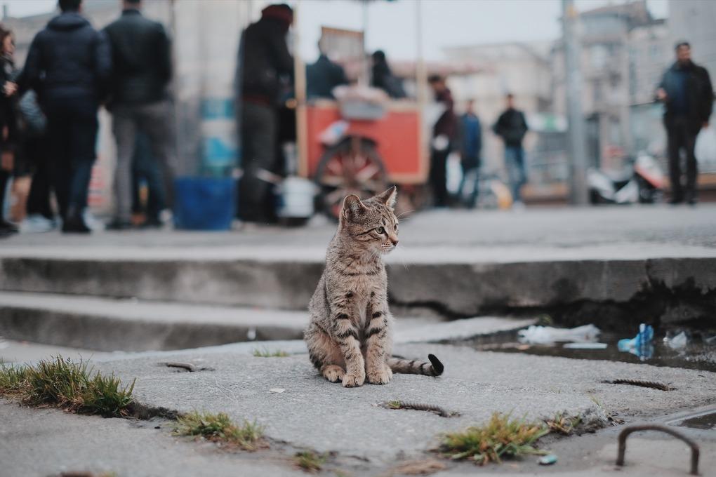 Bushwick's 'Crazy' Cat Lady — Community on Bushwick Daily