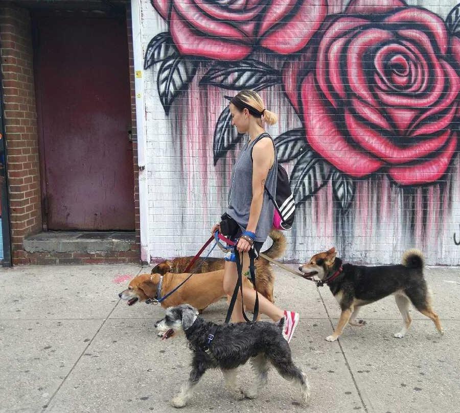 How to Make It as a Professional Dog Walker in Bushwick — People on Bushwick Daily