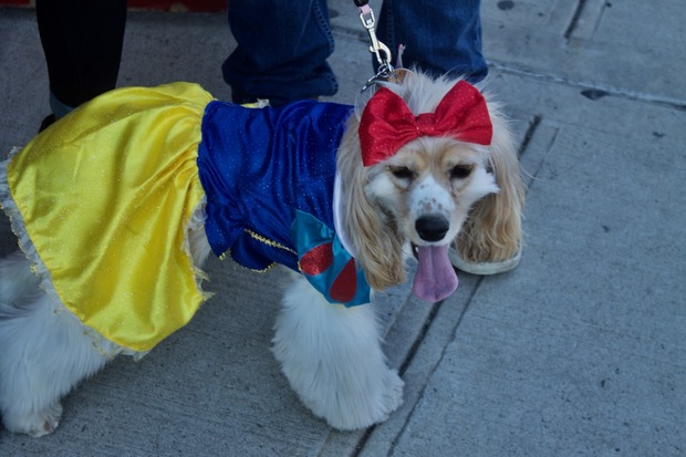 PHOTOS: Dogtoberfest Is Everything You've Ever Wanted In A Costume Contest — Community on Bushwick Daily