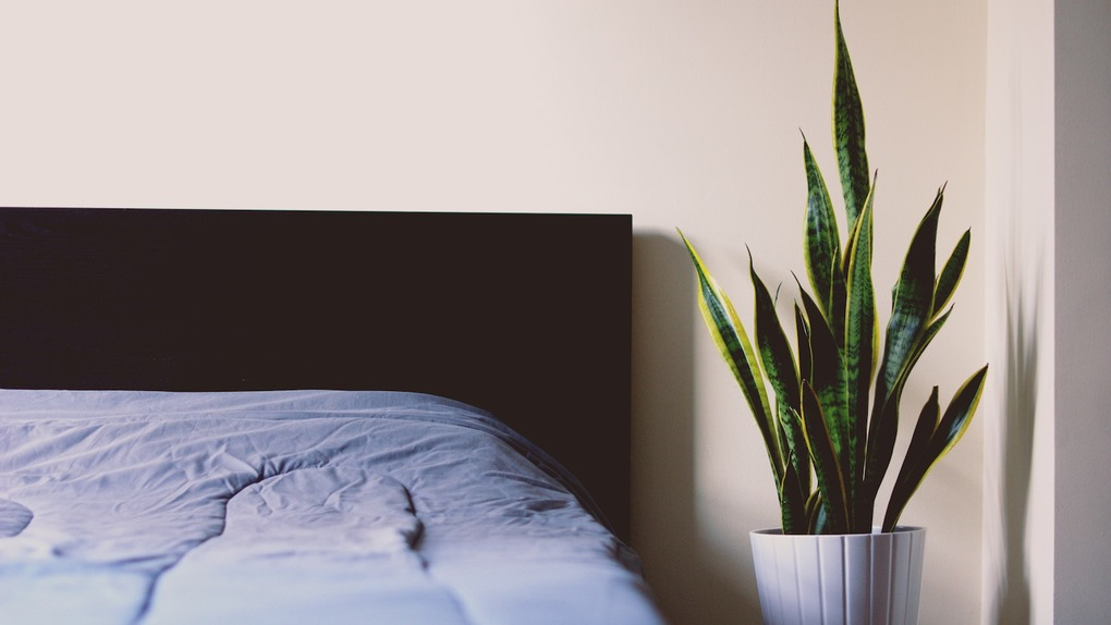 Your Guide to Surviving Bedbugs in Bushwick — Guides on Bushwick Daily