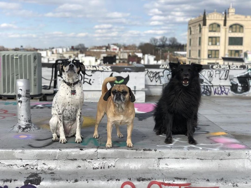 Happy National Pet Day From 11 Cute Bushwick Dogs — Community on Bushwick Daily