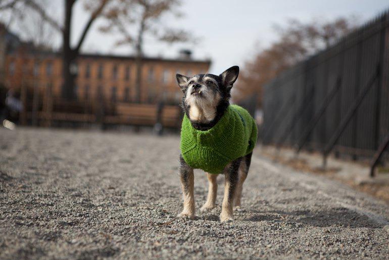 Bushwick dogs howling happy in their brand new dog run! — Pets on Bushwick Daily