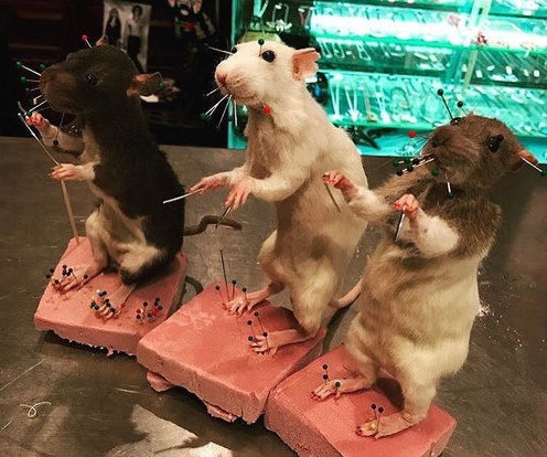 Gross & Fascinating: Learn how to Preserve Rodents in this Rat Taxidermy Class — Arts & Culture on Bushwick Daily