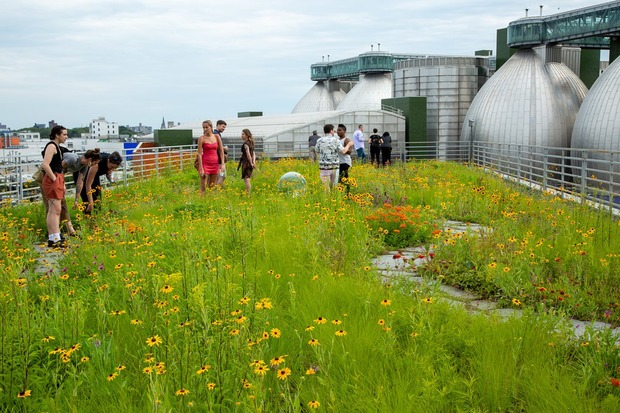 Leading Urban Environmentalists Gathered in Bushwick to Discuss Green Roofs and City Sustainability — News on Bushwick Daily