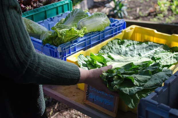 Eat Healthy and Local With East Williamsburg CSA — Community on Bushwick Daily