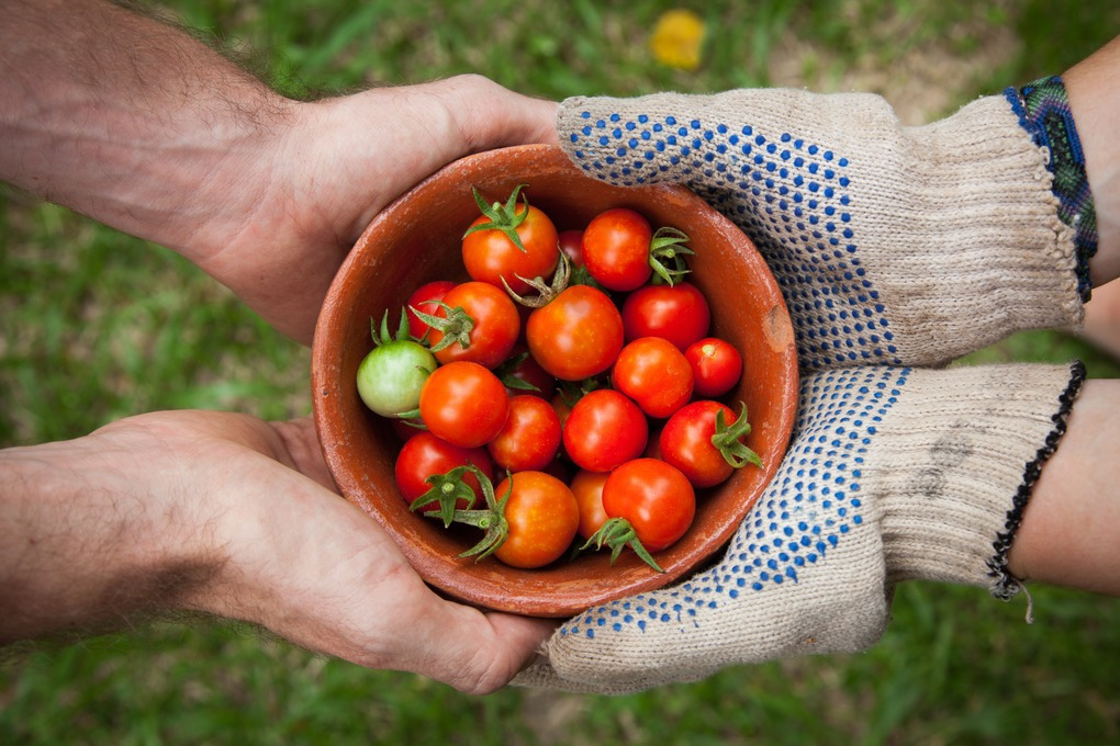 Bushwick Has a Problem: People Aren't Getting Enough Healthy Food — Community on Bushwick Daily