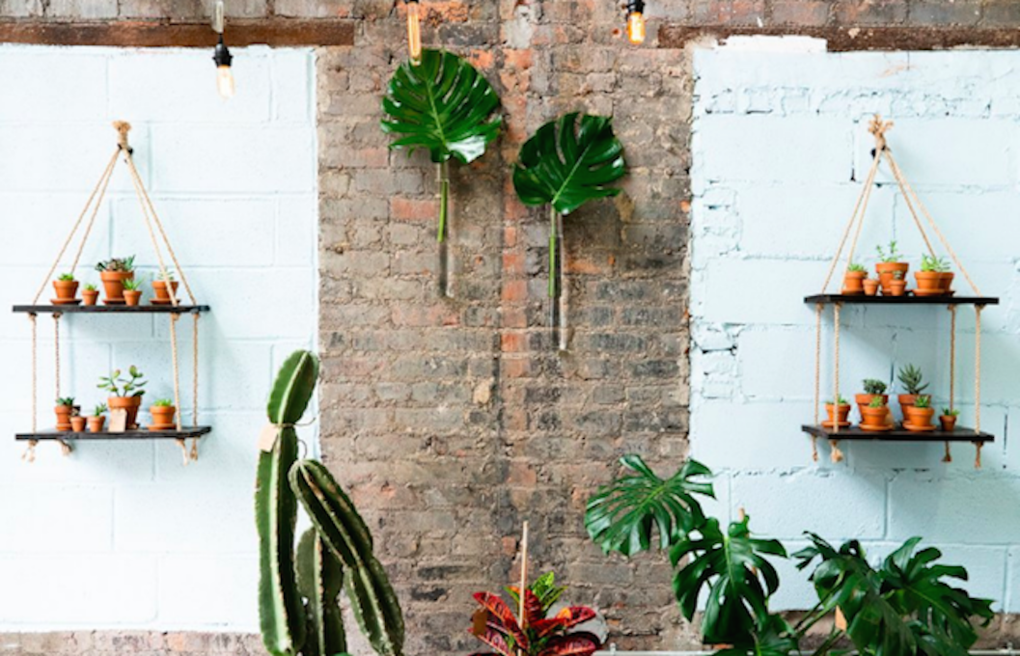 Calling All Plant Lovers! Water & Light Plant Shop Opens in Ridgewood — Fashion and Shopping on Bushwick Daily