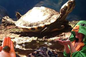 Pet of the Week: Banana, the Turtle Sometimes Needs to Be Tied to a Balloon