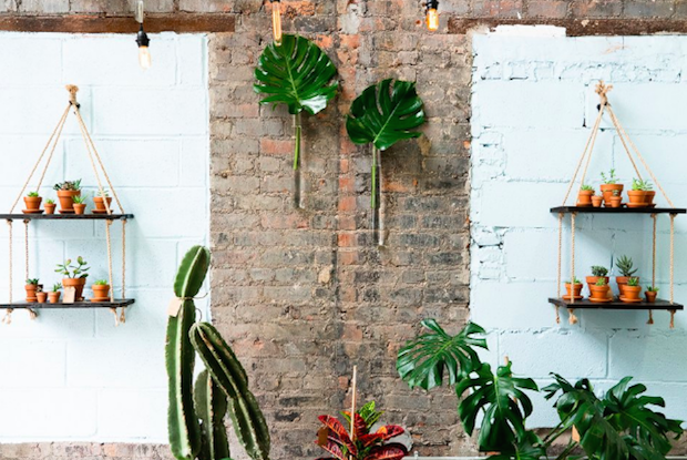 Calling All Plant Lovers! Water & Light Plant Shop Opens in Ridgewood