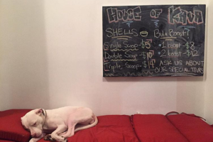 Chill Out at House of Kava, Bushwick's New Kava Bar