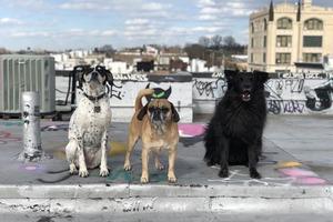 Happy National Pet Day From 11 Cute Bushwick Dogs