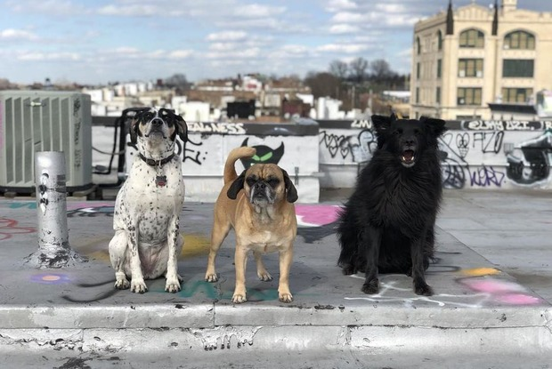 Happy National Pet Day From 11 Cute Bushwick Dogs