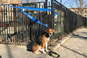 Parks and Playgrounds Are Open, But Dog Runs Aren't?  Bushwick Dog Owners Aren't Happy