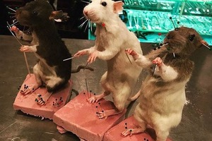 Gross & Fascinating: Learn how to Preserve Rodents in this Rat Taxidermy Class