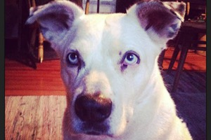 Pet of the Week: Journey's Journey is Incredible