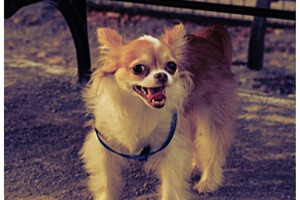 Help Raise Money for the Pups at Maria Hernandez Park