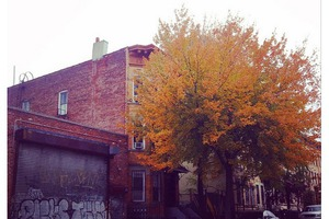 #BushwickDaily Insta-Takeover: How Pretty Is Bushwick's Fall Foliage? Super Pretty.