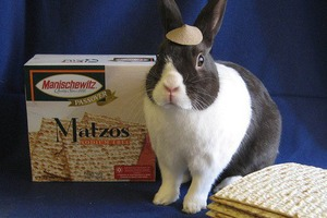 Pet of the Week: Napoleon Bunnypart Has Complexes Over Blueberries