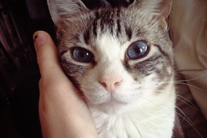 Bushwick Pet of the Week: Meet Little Bat... The Cat.