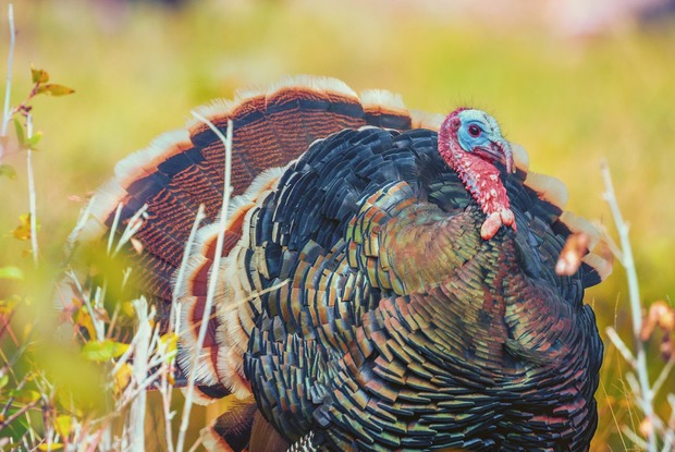 Turk N Twerk, Thanksgiving Art Party, and More: 5 Events for Your Holiday Bushweek