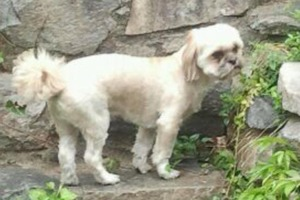 Heartbreaking: Franky, the Dog from English Kills is Missing