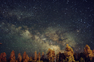 Stargazing at a Cemetery, an Animation Festival, and More in This Week's Events Round Up