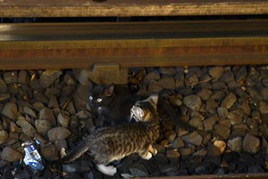 The Pair of Infamous Subway Kittens Now Lives in Bushwick