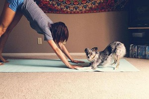 At Doga, You Don't Have to Choose Between Yoga and Time With Your Pup