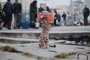Bushwick's 'Crazy' Cat Lady