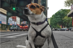 This Delightful Bushwick Insta-Celeb Is a Very Persuasive Adoption Advocate