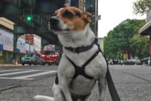 This Delightful Bushwick Insta-Celeb Is a Very Persuasive Adoption Advocate