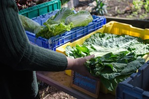 Eat Healthy and Local With East Williamsburg CSA